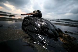 SOUTH KOREA OIL SPILL
